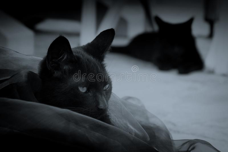 Two black cats in black and white. Two black cats on the territory of the house stock images