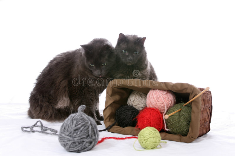 Two black cats turn over a basket of yarn. Two black cats looking at an overturned basket of yarn stock image