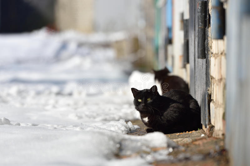 Two black cats are walking in the street on a winter day royalty free stock photography