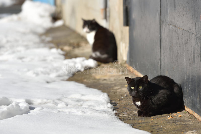 Two black cats are walking in the street on a winter day royalty free stock images