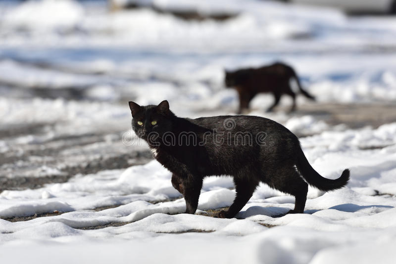 Two black cats are walking in the street on a winter day stock photos