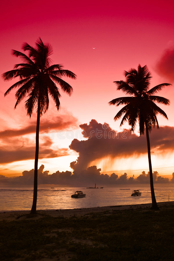 Download Two Black Palm On Night Beach Stock Photo - Image: 9233364
