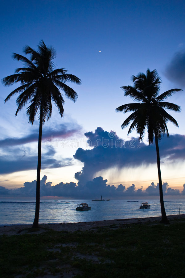 Two Black Palm On Night Beach Royalty Free Stock Photo