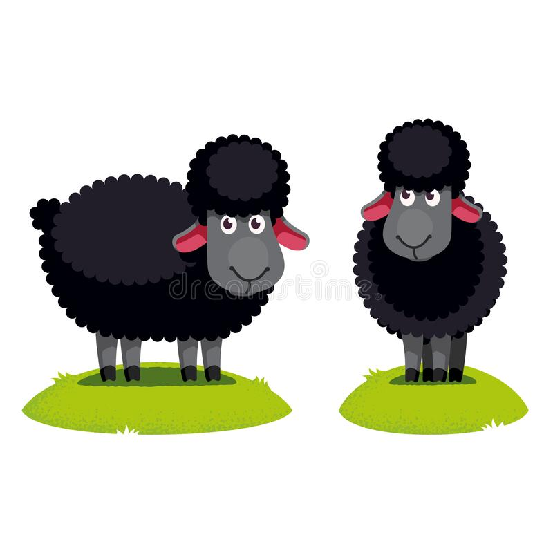 Two black sheep standing on green lawn. Side, front view. Odd different black sheep cartoon character farm animal clipart. Domestic animal. Flat style vector stock illustration