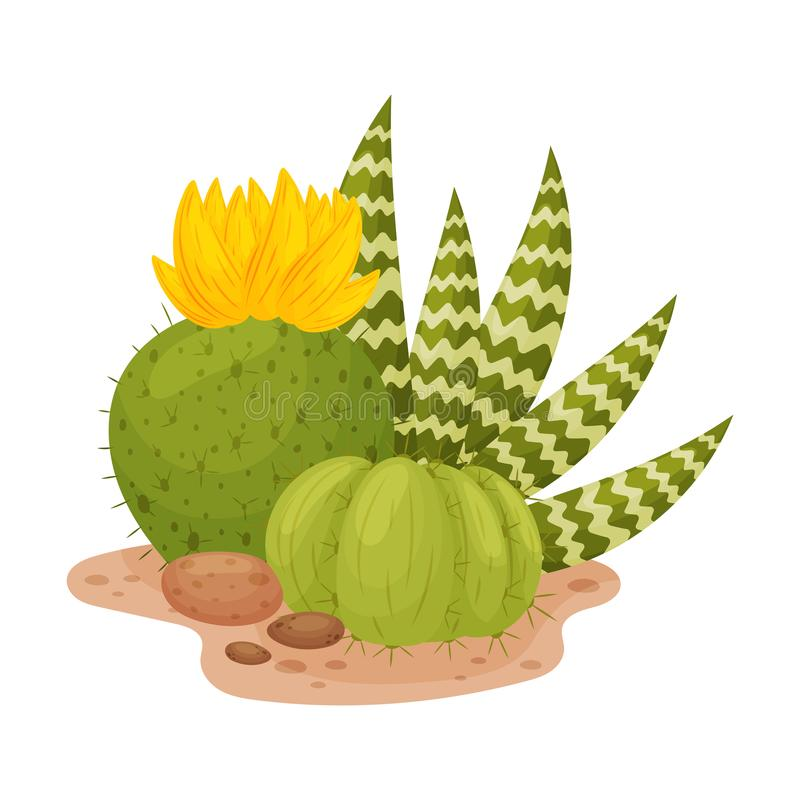 Two blooming cactus in the shape of a ball. Vector illustration on a white background. stock illustration