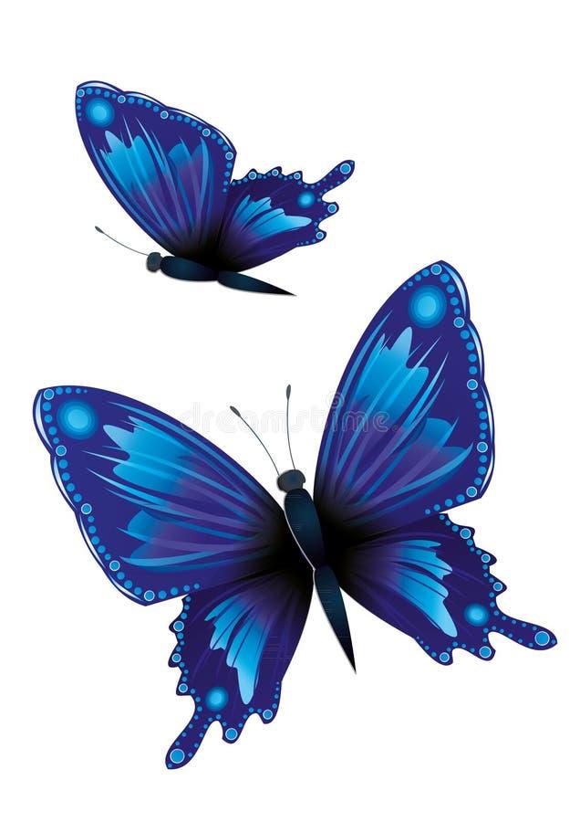 Two blue butterflies vector illustration