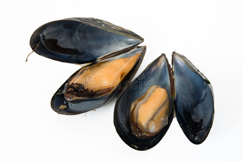 Download Two boiled mussels stock photo. Image of seafood, protein - 9276502
