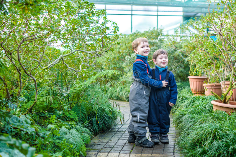 Two boys brothers friends having fun in greenhouse. azalea winter garden. kids and family royalty free stock image