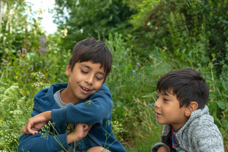 Two boys caught a praying  a grasshopper in the forest and view it with curiosity.  Summer holidays for children royalty free stock photos