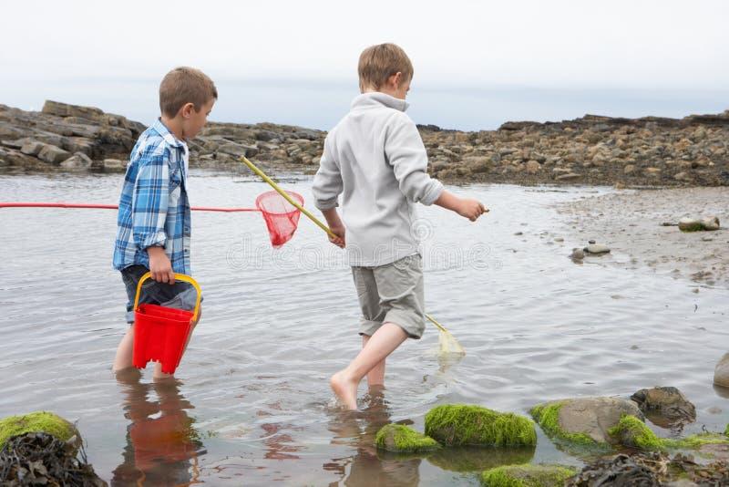 Two boys collecting shells on beach stock photos