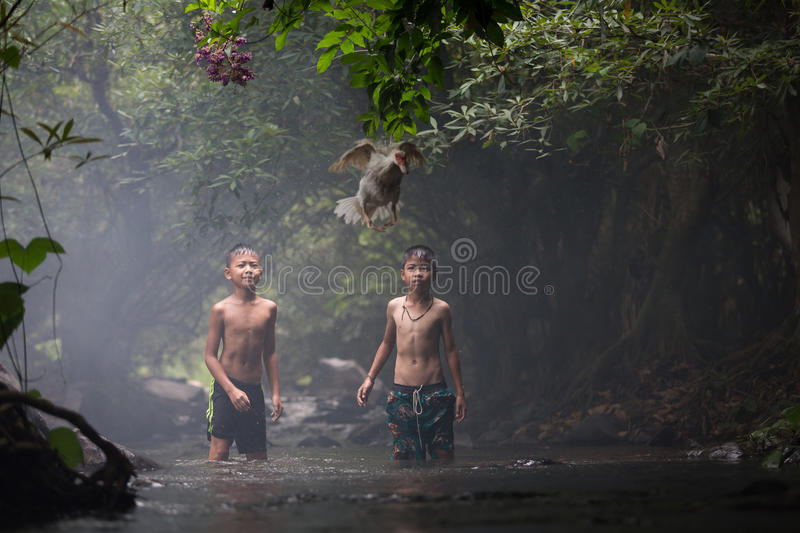 Two boys with duck royalty free stock image
