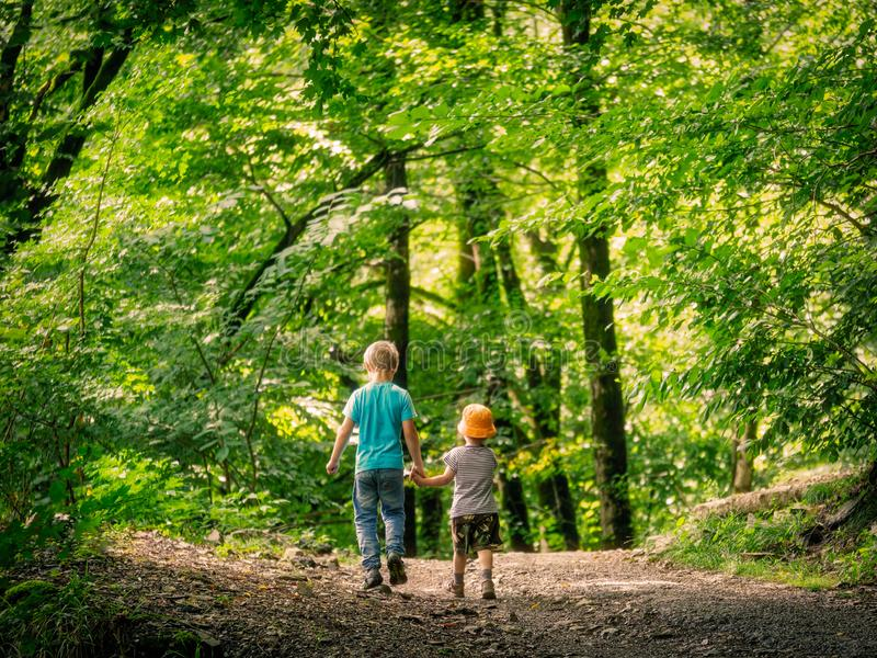 Two boys go along the path in the green forest and hold hands stock image