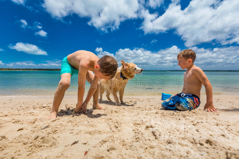 Two boys hugging golden retriever on the sandy beach royalty free stock photos