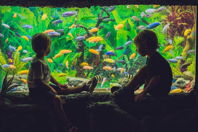 Two boys look at the fish in the aquarium royalty free stock images