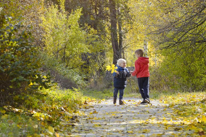 Two boys plaing in the autumn forest. Sunny day. Back view royalty free stock image