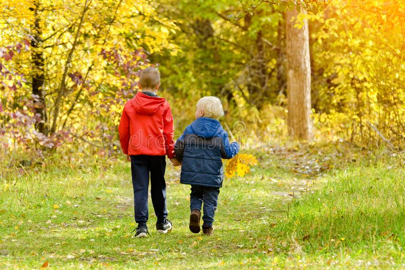 Two boys walking in the autumn forest. Sunny day. Back view royalty free stock photography