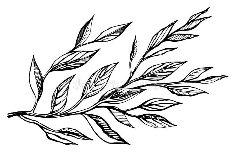 Two branches with leaves vector illustration. stock illustration