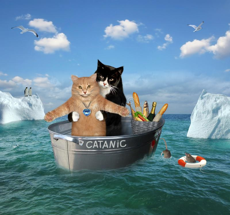 Two cats drift in a washtub royalty free stock photography