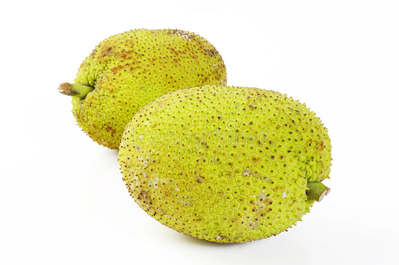 Two breadfruit royalty free stock images