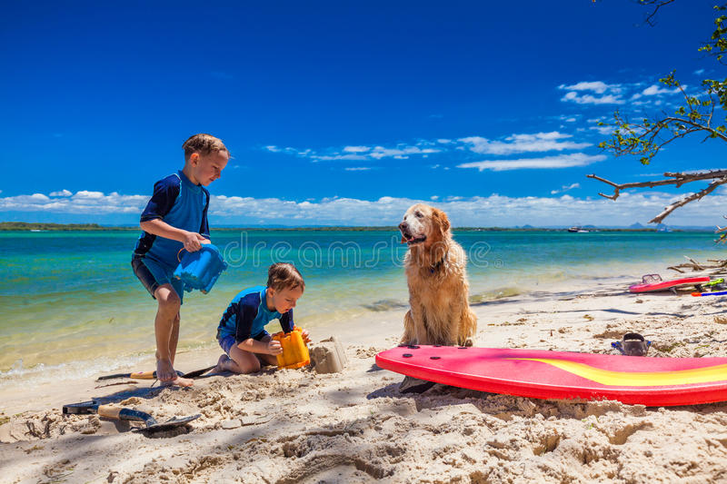Two brother playing on the beach with bucket and golden retrieve stock photos