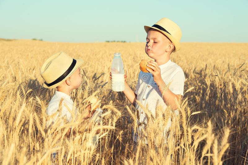 Two brothers eat buns and drink milk on a wheat field. stock photo