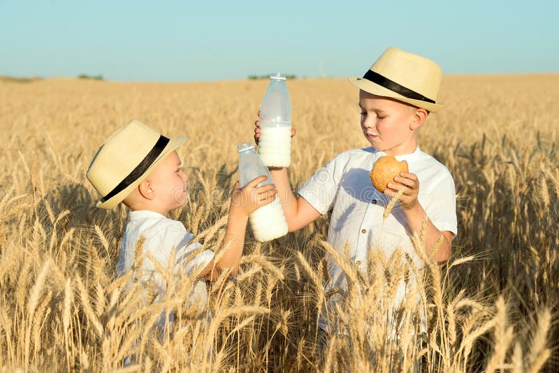 Two brothers eat buns and drink milk on a wheat field. royalty free stock image