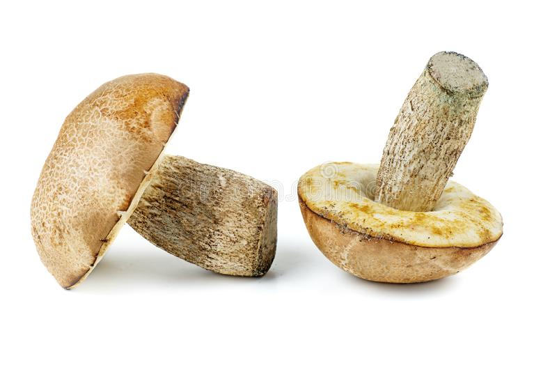 Two brown cap boletus isolated royalty free stock photos