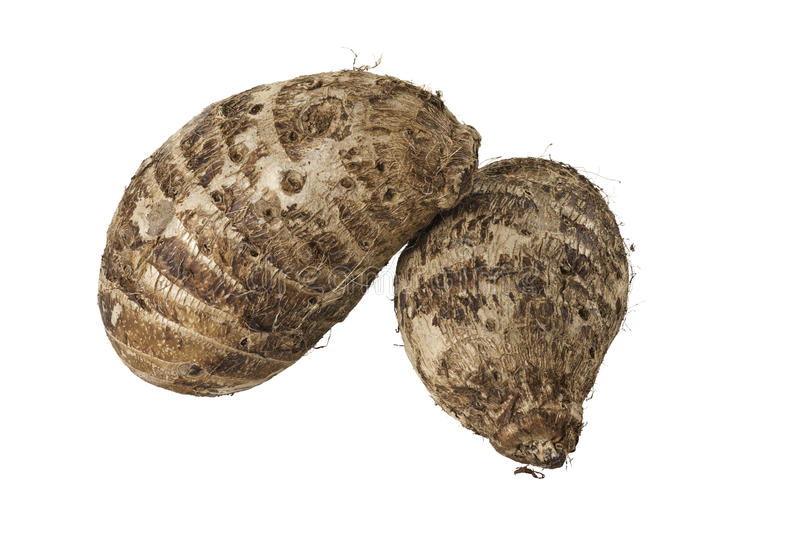Two Brown Hairy Malanga Tubers royalty free stock images