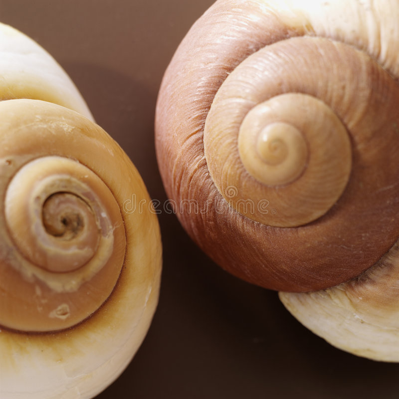 Two brown shells royalty free stock photo