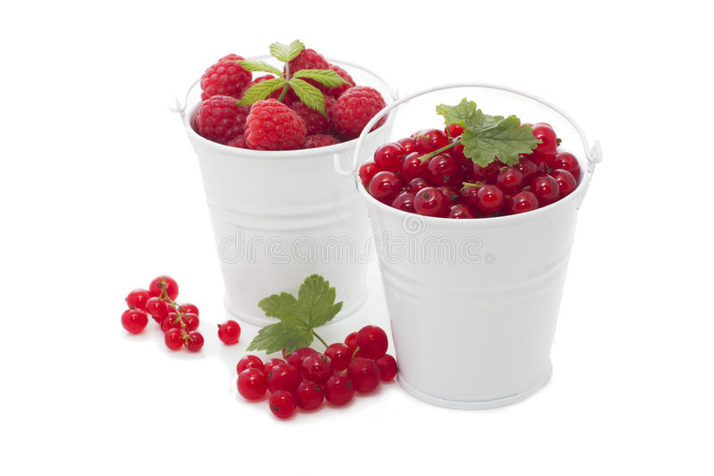 Two bucket with fresh berries royalty free stock image
