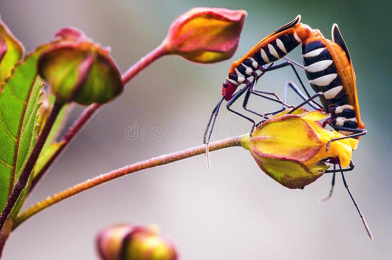 Two bugs. In summer time royalty free stock photo