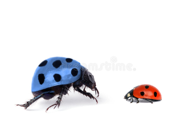 Two bugs on white royalty free stock photo