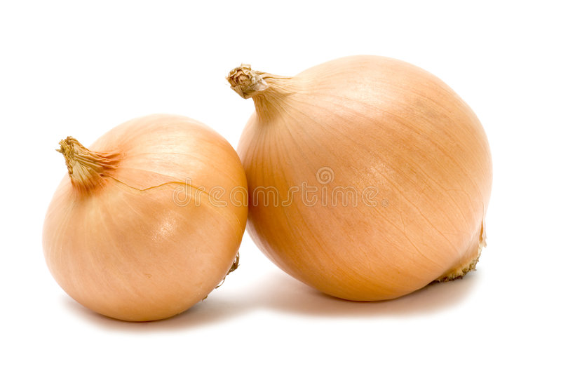 Two bulb onion stock photography
