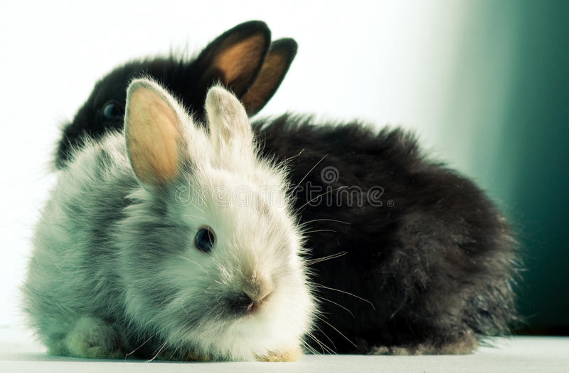 Two bunnies stock photo