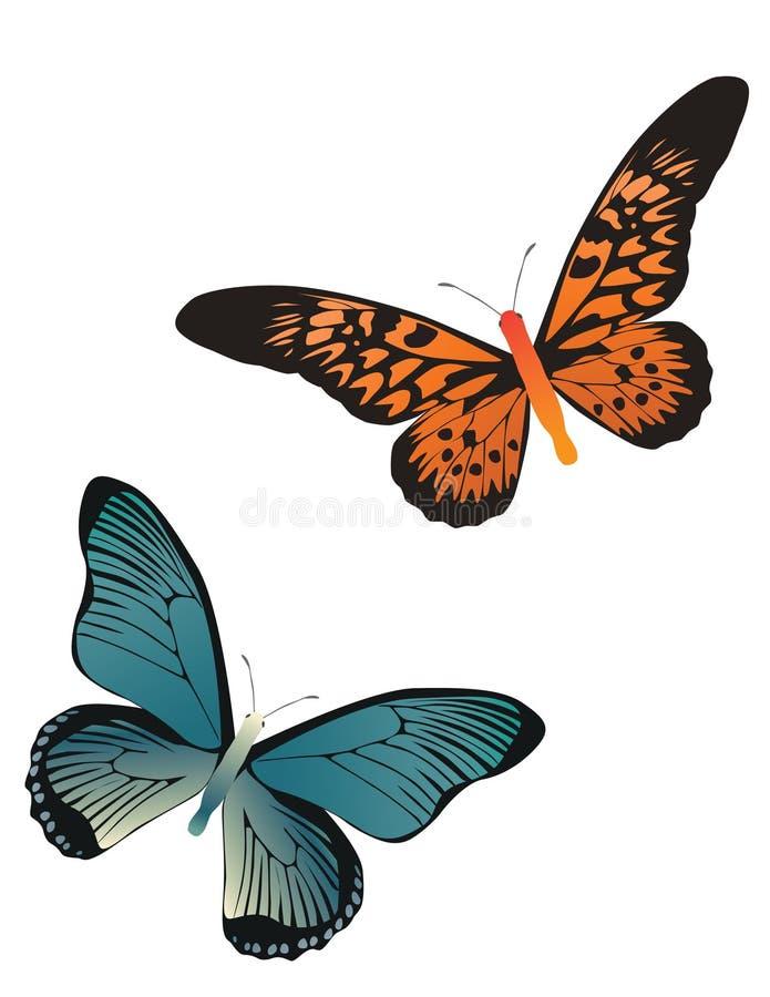 Two butterflies stock illustration