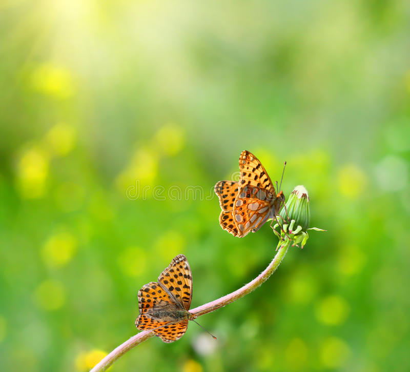 Download Two butterfly on flowers stock photo. Image of blinking - 23522876