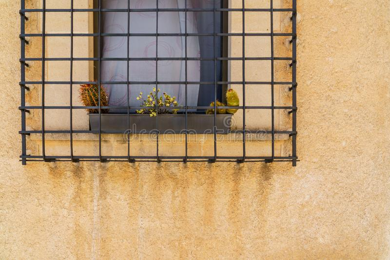 Plants growing up behind iron bars stock photography