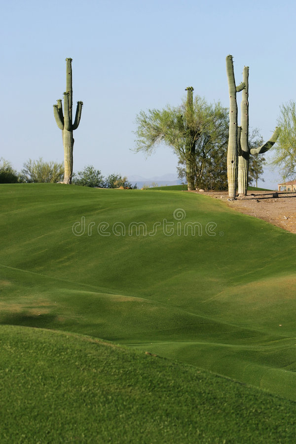 Two Cactus On A Golf Course royalty free stock photo