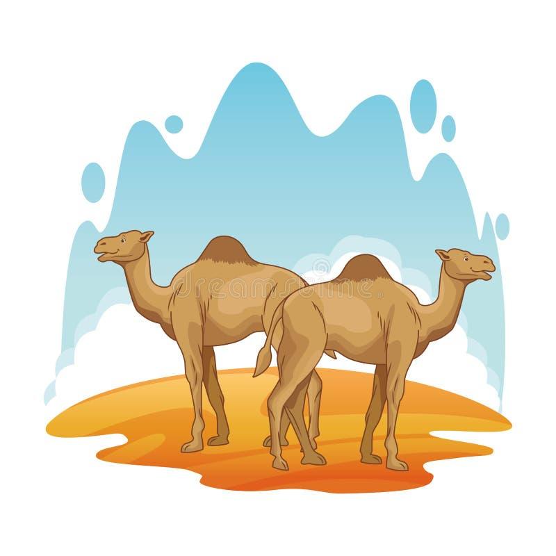 Two camels in desert scenery cartoon. Vector illustration graphic design vector illustration