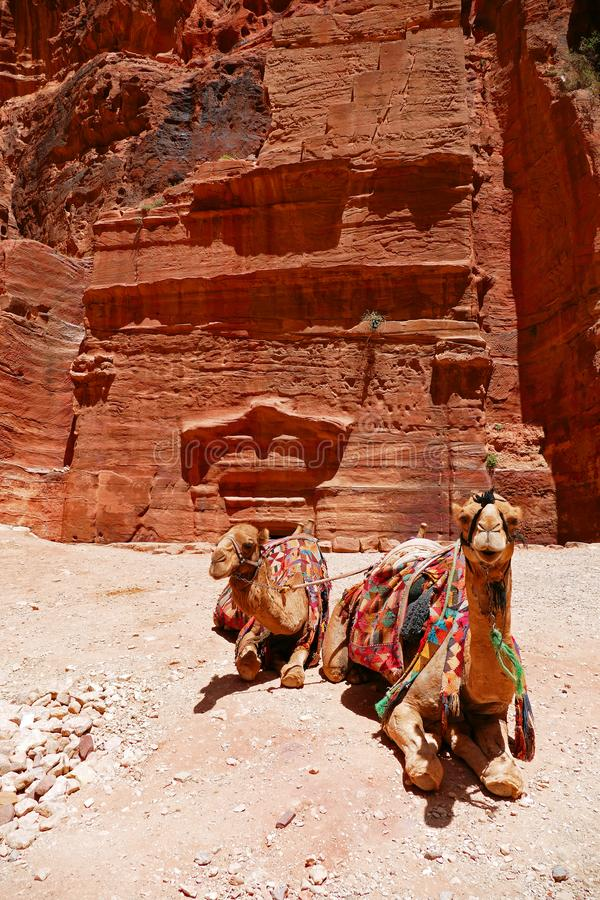 Two Camels In Front of Ancient Nabataean Ruined Rock-Cut Tomb in Petra, Jordan royalty free stock photos