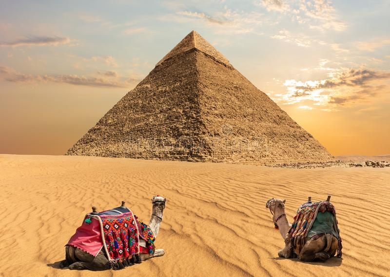 Two camels near the Pyramid of Chephren, Egypt royalty free stock photography