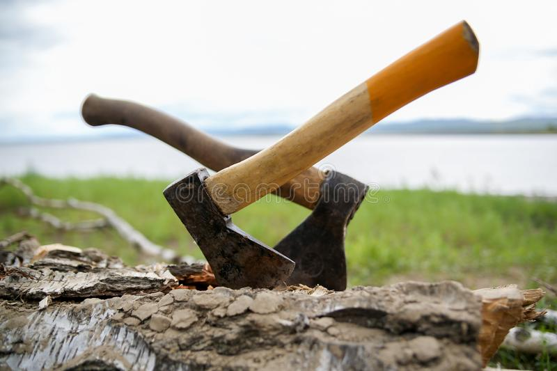 Two camping axes stuck in a tree royalty free stock images
