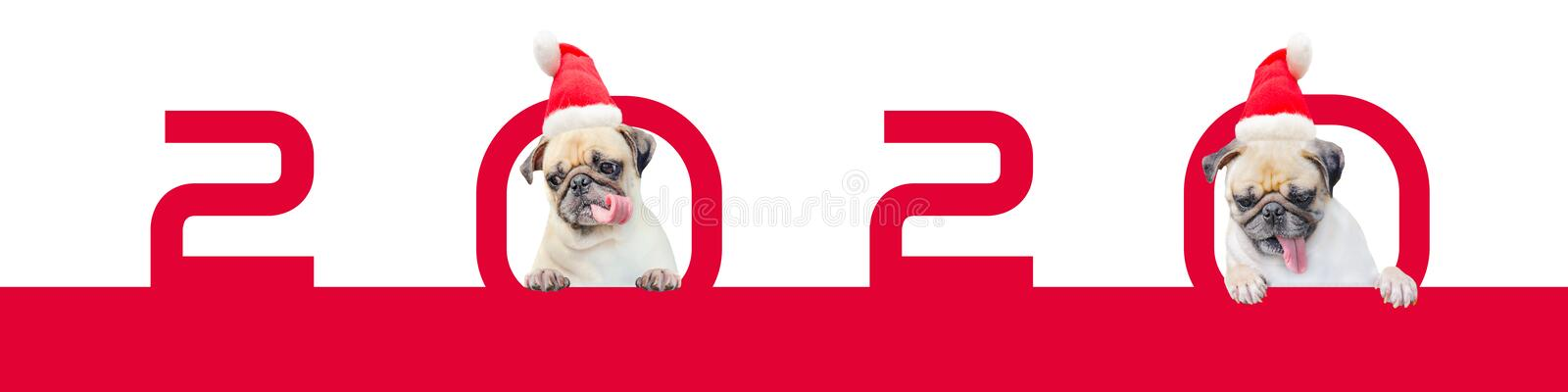 Two Cartoon Little Pug Dog in a red christmas hat with number 2020. Cute cartoon christmas animal dog. Christmas and New Year vector illustration