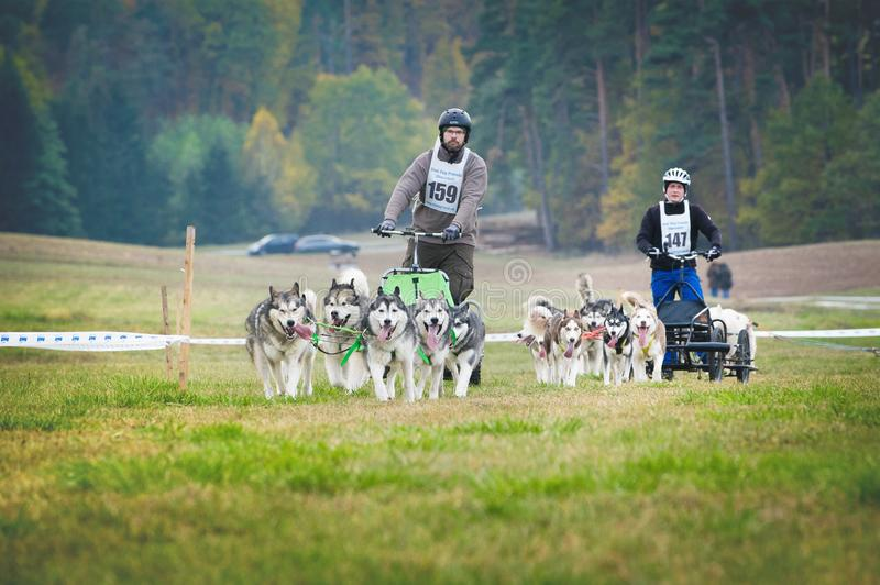 Two Carts pulled by Sled Dogs, Mushing Off Snow Crosscountry Races in Typical Autumnal Weather. Noisy Photo. GERMANY, Oberndorf, Geslau - NOVEMBER 3, 2018: Two royalty free stock photos
