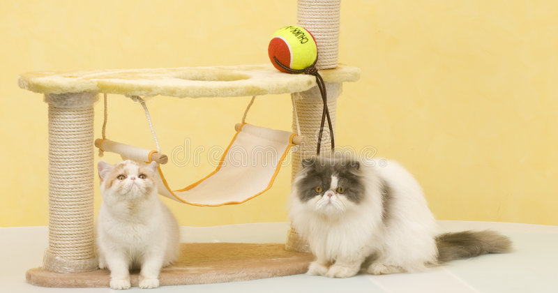 Two cat royalty free stock photography