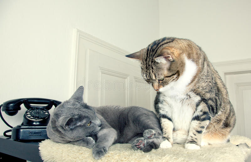 Download Two Cats stock image. Image of charming, lying, cute - 17956707