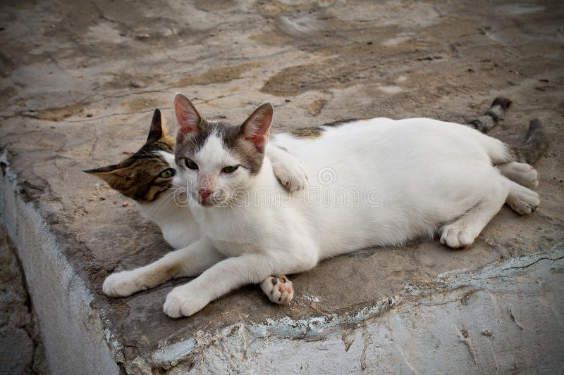 Two cats. Two alley cats playing in the street stock images