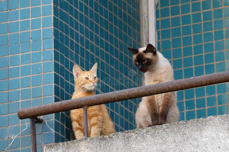 Cats on the balcony of the apartment. Two cats on the balcony of the apartment royalty free stock photography