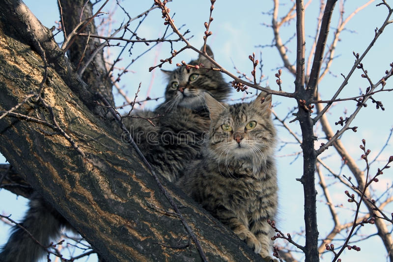 Two cats stock images