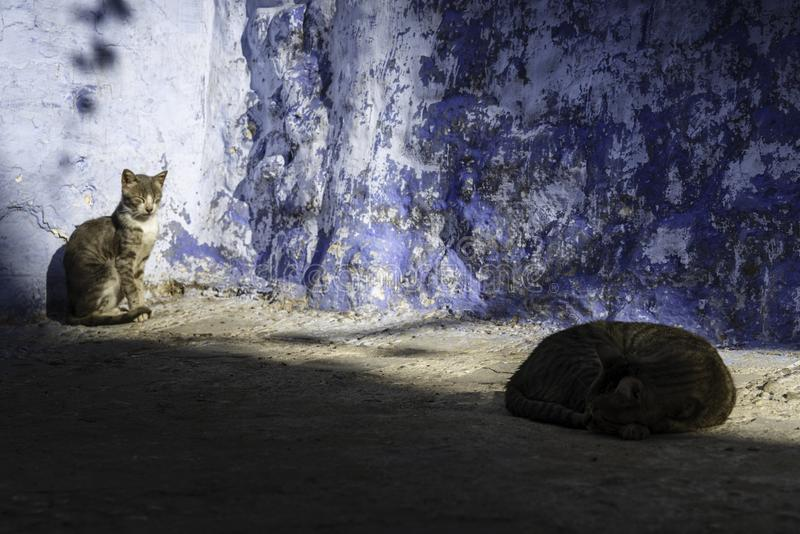 The two cats of Chefchaouen stock images